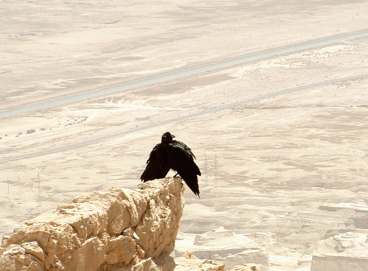 Israel-Rundreise: Die antike Festung Masada tront 400 Meter über dem tiefsten Punkt der Erde am Toten Meer