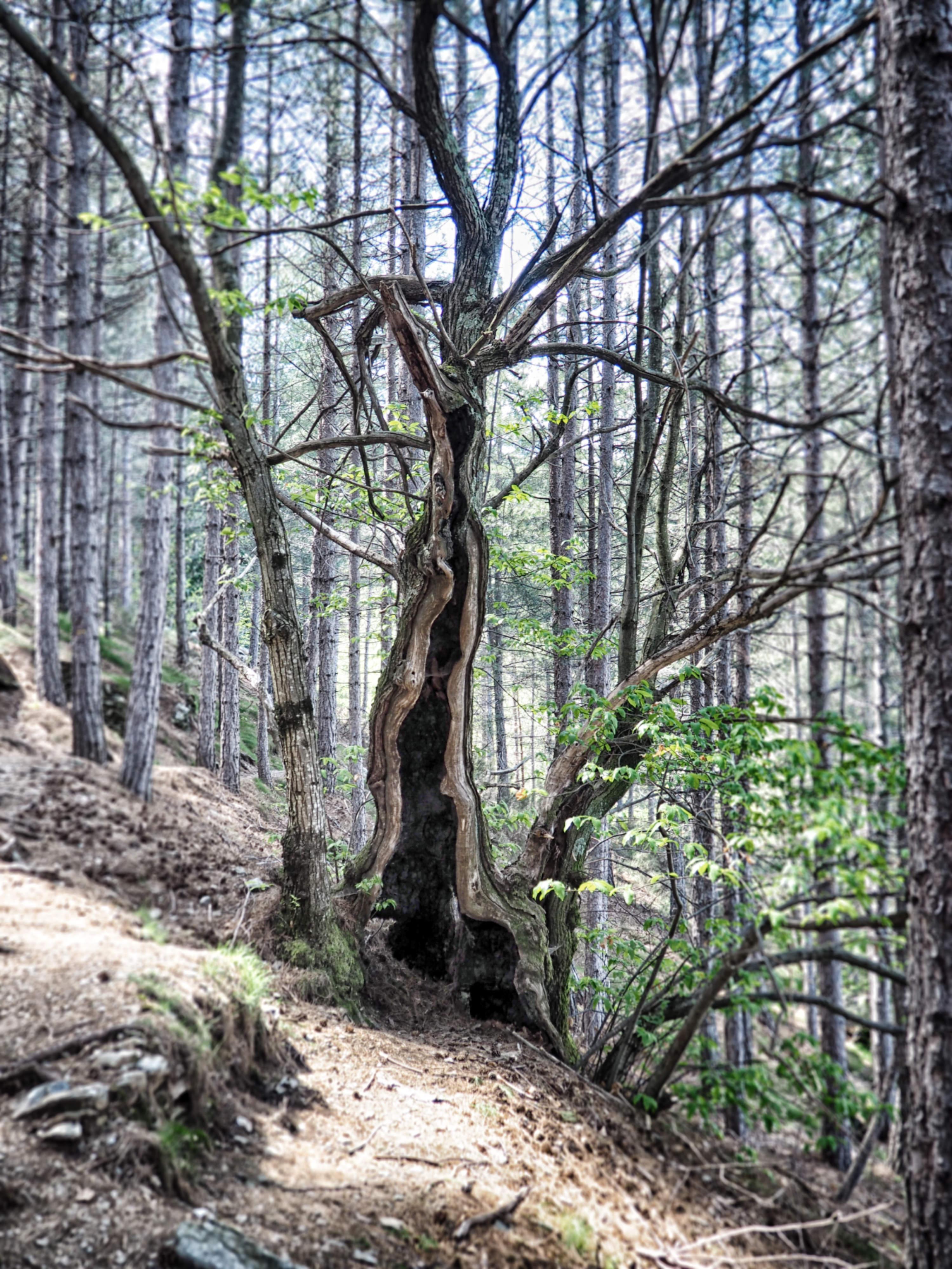 Die mystischen Wälder der Cevennen in Frankreich