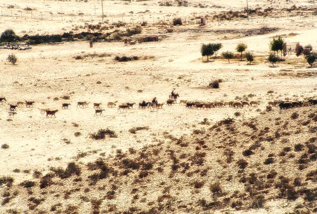 Israel Tipps: Beduinen in der Negev Wüste